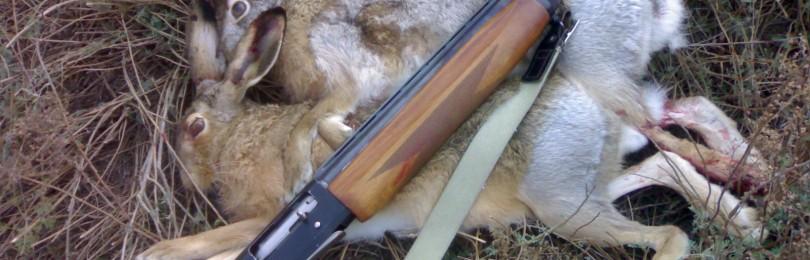 Коллективные охоты на зайца – виды, правила, организация, проведение