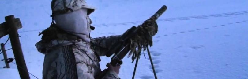 """""""Охота на лису с манком Mini Predator"""" смотреть видео онлайн"""
