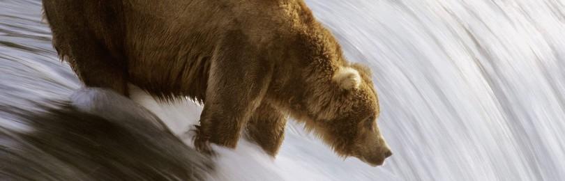 """""""Охота на медведя с лайками"""" смотреть видео онлайн"""