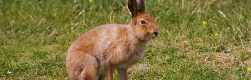 Охота на зайца осенью