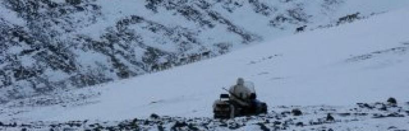 Охота на волков на снегоходе