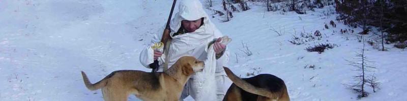 Охота с гончими на кабана