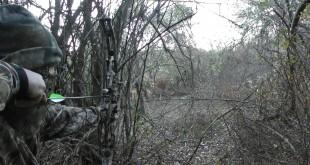 Охота с луком