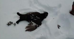 Охота на тетерева зимой
