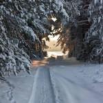 Полезные советы, что делать, если вы заблудились на охоте и как выжить в зимнем лесу