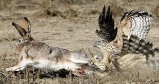 Основные виды ловчих птиц