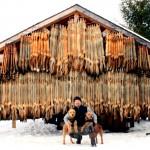 Добыча соболей в Якутии