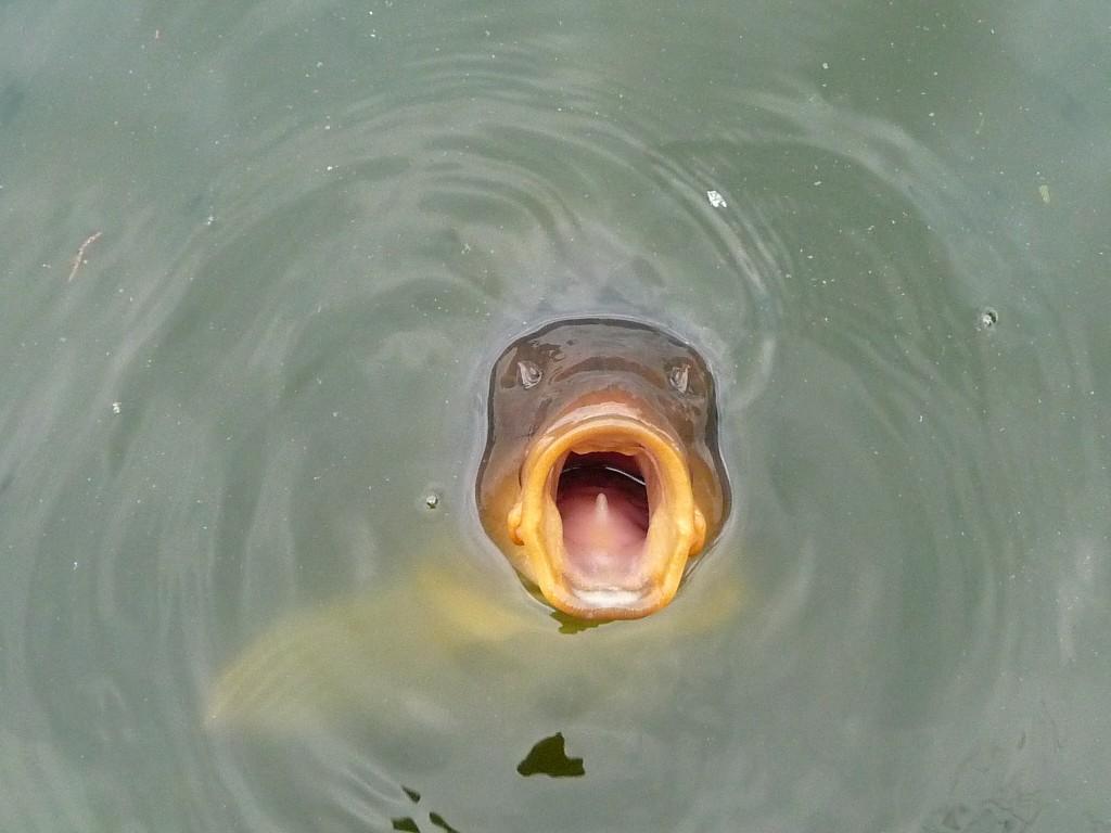 Эй, рыбак! Прикормку не жалей!
