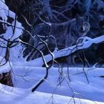 Логово зимой