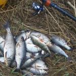 Первый улов - крупная плотва
