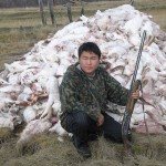 Промысловая охота на зайца