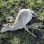 Погибшие животные