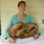Череп пещерного медведя, найденного в Аргентине