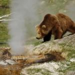 Гигантский медведь
