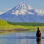 На Камчатку за бурым медведем: охотничий туризм в России
