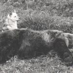 Охота 1989 года на Камчатке