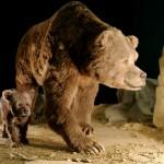 Пещерный медведь (реконструкция в музее)