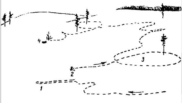 Как распутать следы зайца