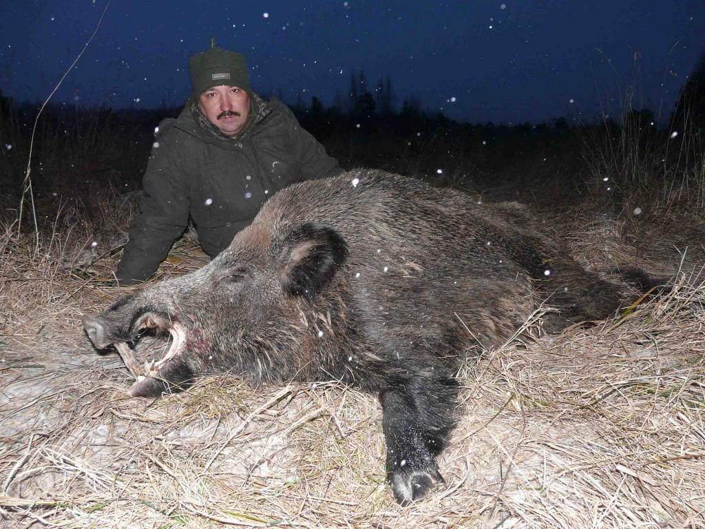 Убитый кабан и охотник