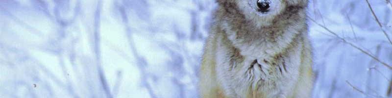 Охотничья история — «Мужики»