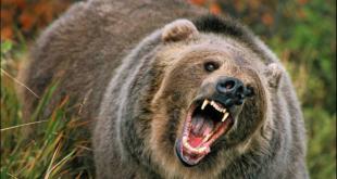 Новый порядок выдачи лицензий и разрешений на охоту – старт 17 июня