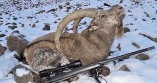 Помповые и самозарядные винтовки – общая информация, преимущества и недостатки