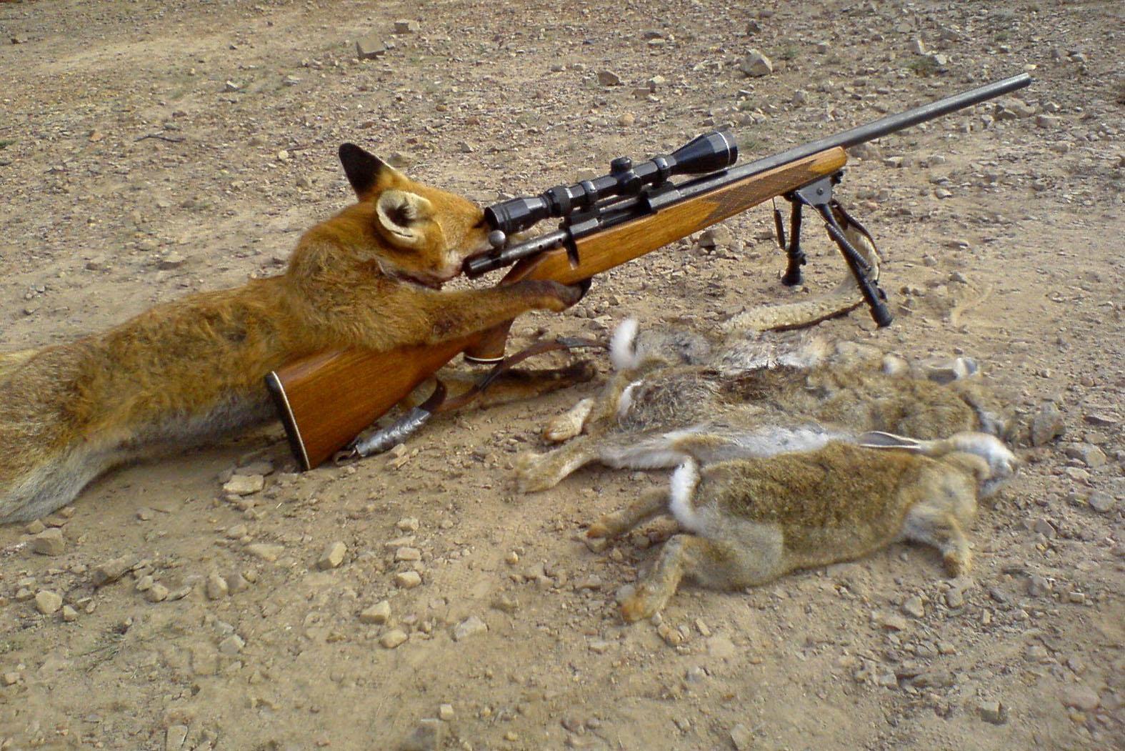 Практические советы стрелкам и охотникам по использованию боеприпасов и оружия
