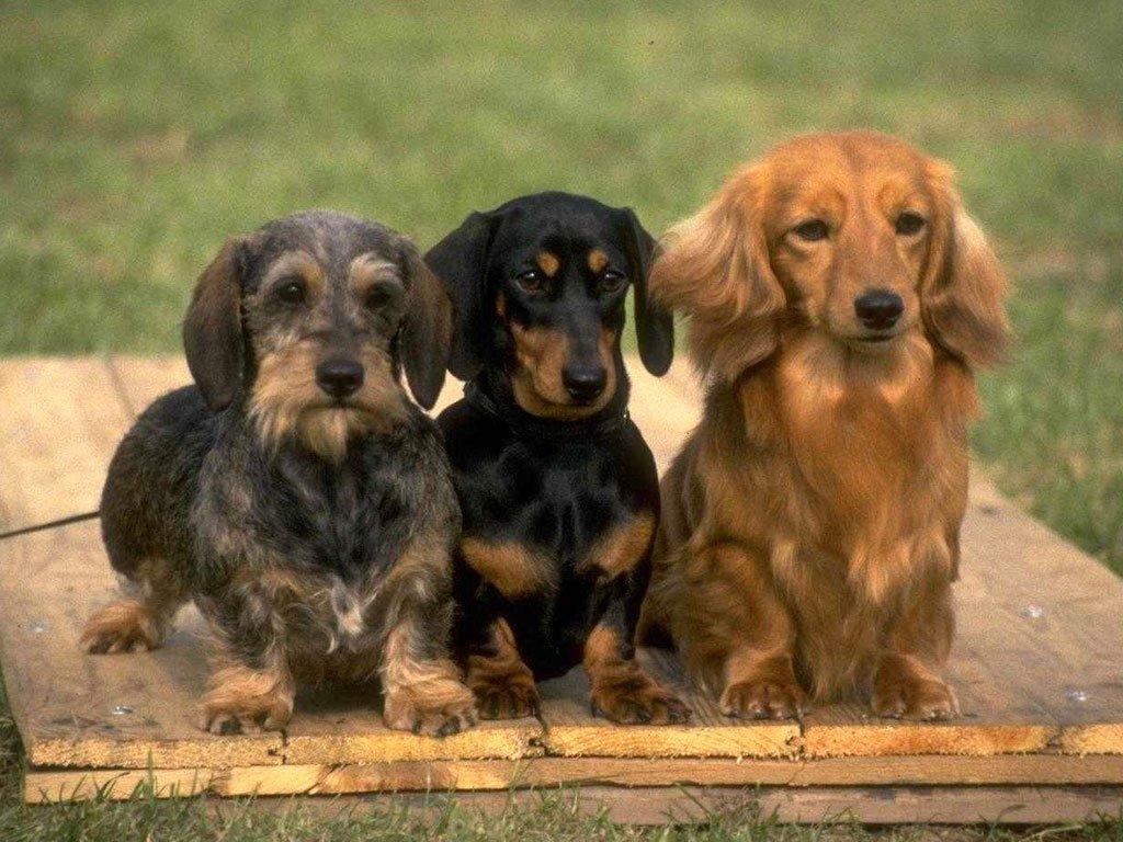 Первичная дрессировка всех пород охотничьих собак – как воспитать себе друга и помощника