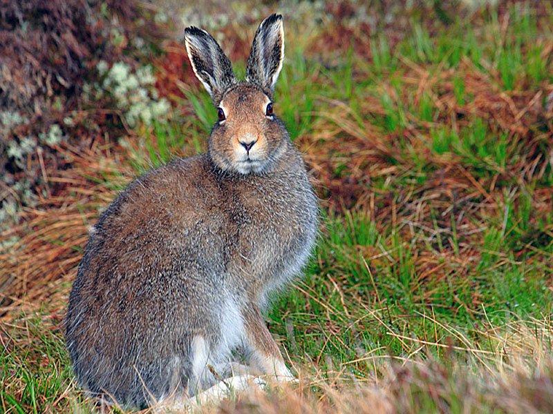 Как правильно обработать, разделать и замариновать тушку дикого зайца