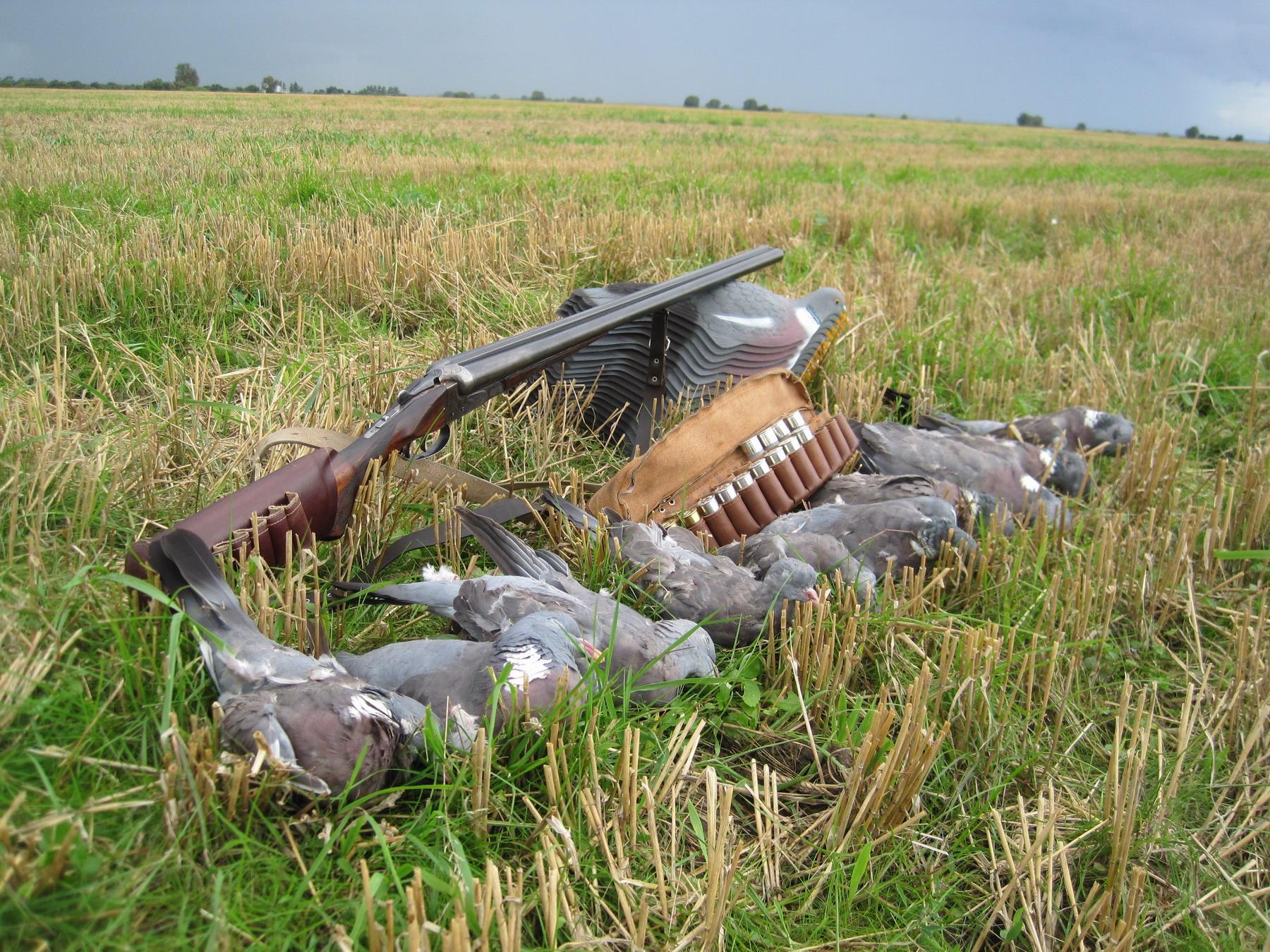 Охота на голубей в Англии смотреть видео онлайн