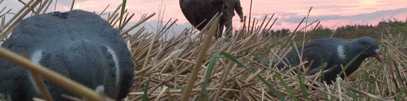 Охота на вяхиря из скрадка смотреть видео онлайн