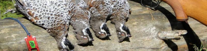 Осенняя охота на рябчика смотреть видео онлайн