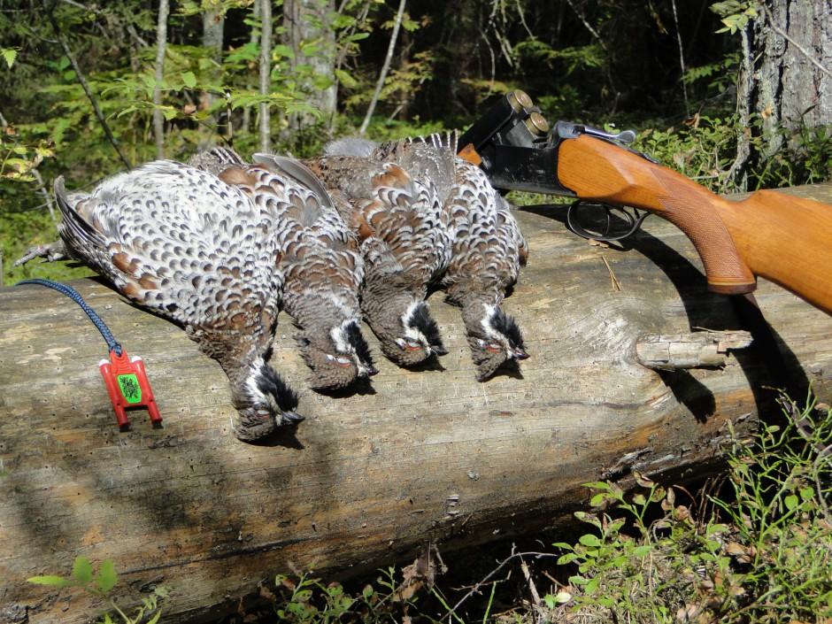 Охота на рябчика с манком и курцхааром смотреть видео онлайн