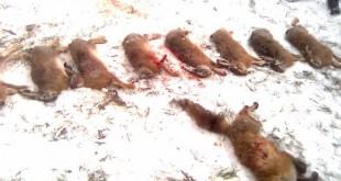 Охота на осеннего вальдшнепа с дратхааром смотреть видео онлайн