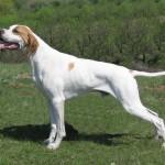 Обучение охотничьей собаки — Подача дичи — смотреть видео онлайн