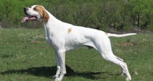 «Обучение охотничьей собаки — Подача дичи! » — смотреть видео онлайн