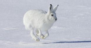 «Охота на зайца 2013 » — смотреть видео онлайн