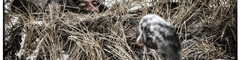 «Охота на гуся в украине» — смотреть видео онлайн