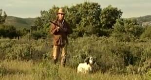 «Охота на зайца в камыше с собакой» смотреть видео онлайн