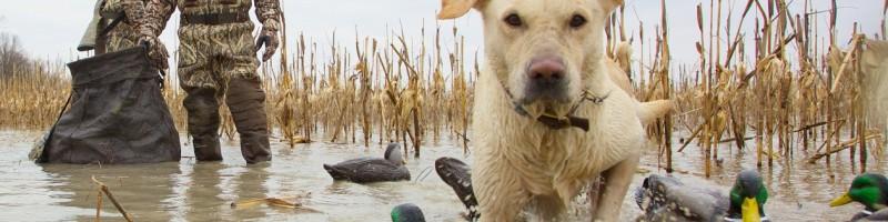 Охота на уток с чучелами