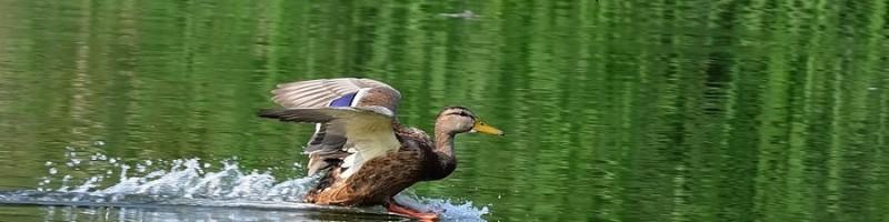 Другие способы охоты на уток