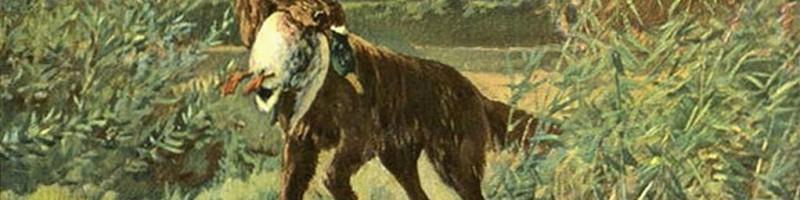 Охота на уток с собакой