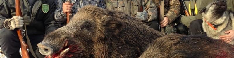 «Охота на кабана в украине» смотреть видео онлайн