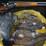 Охота на вяхиря в Англии смотреть видео онлайн