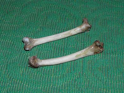 Кости для изготовления манка