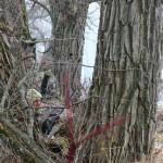 Скрадок в старом дереве