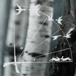 Стрельба по линейке в летящую птицу