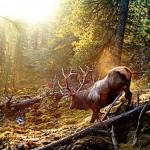 Марал в лесу (Саяны)