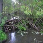 Плотина на лесной речке