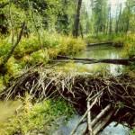 Плотина в Подмосковье